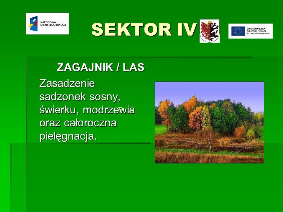 SEKTOR IV ZAGAJNIK / LAS Zasadzenie sadzonek sosny, świerku, modrzewia oraz całoroczna pielęgnacja.