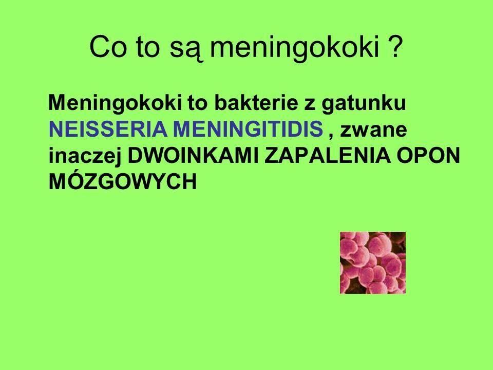Co to są meningokoki ? Meningokoki to bakterie z gatunku NEISSERIA MENINGITIDIS, zwane inaczej DWOINKAMI ZAPALENIA OPON MÓZGOWYCH
