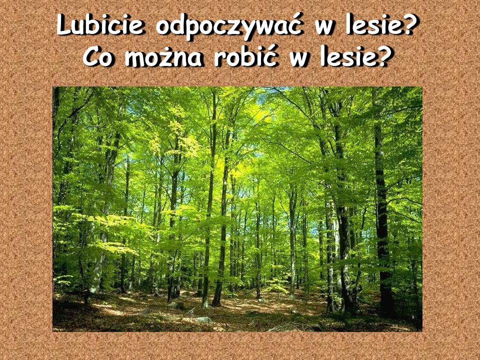 Lubicie odpoczywać w lesie? Co można robić w lesie?