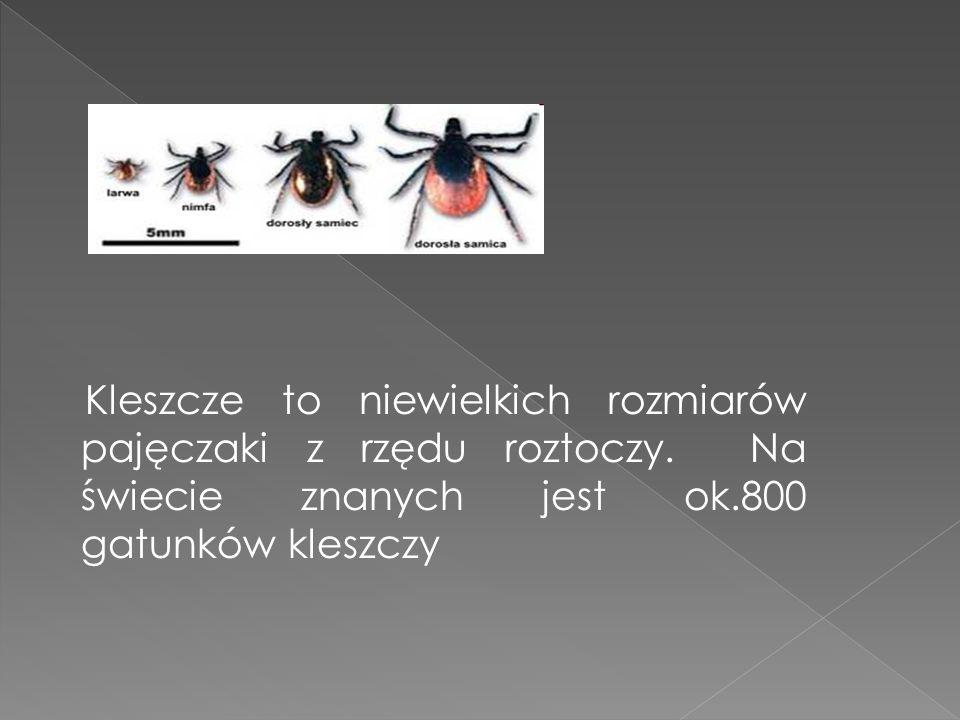 Kleszcze to niewielkich rozmiarów pajęczaki z rzędu roztoczy.