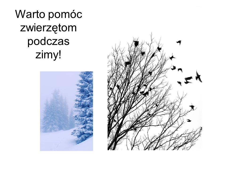 Warto pomóc zwierzętom podczas zimy!
