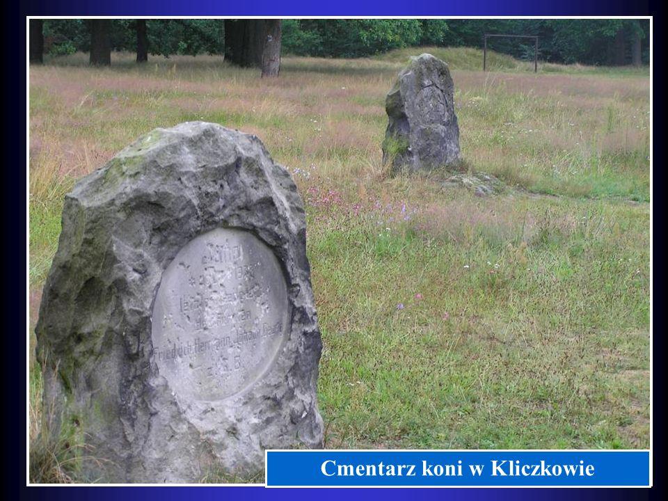 Cmentarz koni w Kliczkowie