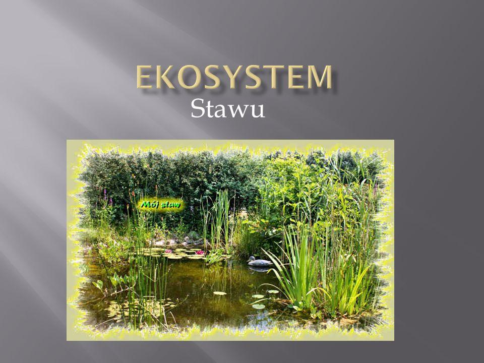 Ekosystem – jedno z podstawowych pojęć w ekologii.
