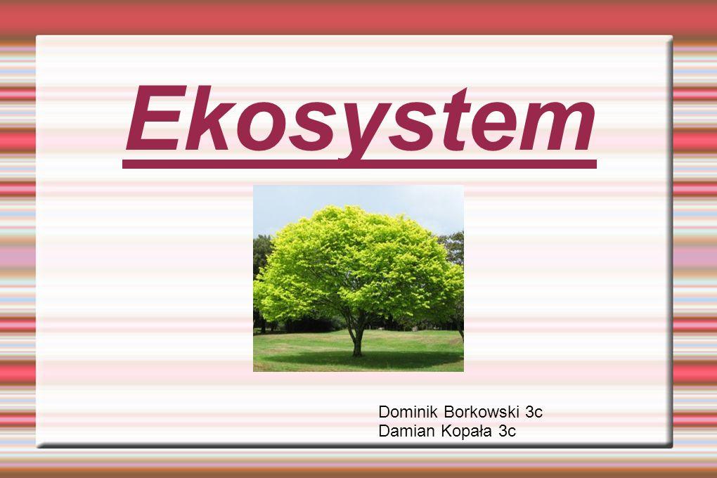 Ekosystem Ekosystem – jedno z podstawowych pojęć w ekologii.