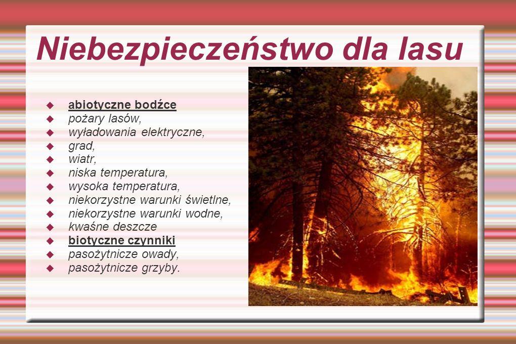 Niebezpieczeństwo dla lasu abiotyczne bodźce pożary lasów, wyładowania elektryczne, grad, wiatr, niska temperatura, wysoka temperatura, niekorzystne w
