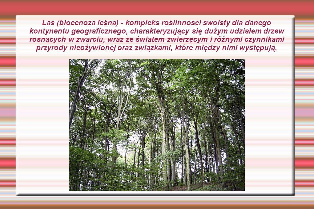 Las (biocenoza leśna) - kompleks roślinności swoisty dla danego kontynentu geograficznego, charakteryzujący się dużym udziałem drzew rosnących w zwarc
