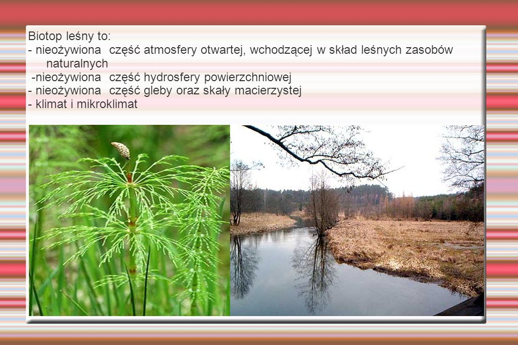 Biotop leśny to: - nieożywiona część atmosfery otwartej, wchodzącej w skład leśnych zasobów naturalnych -nieożywiona część hydrosfery powierzchniowej