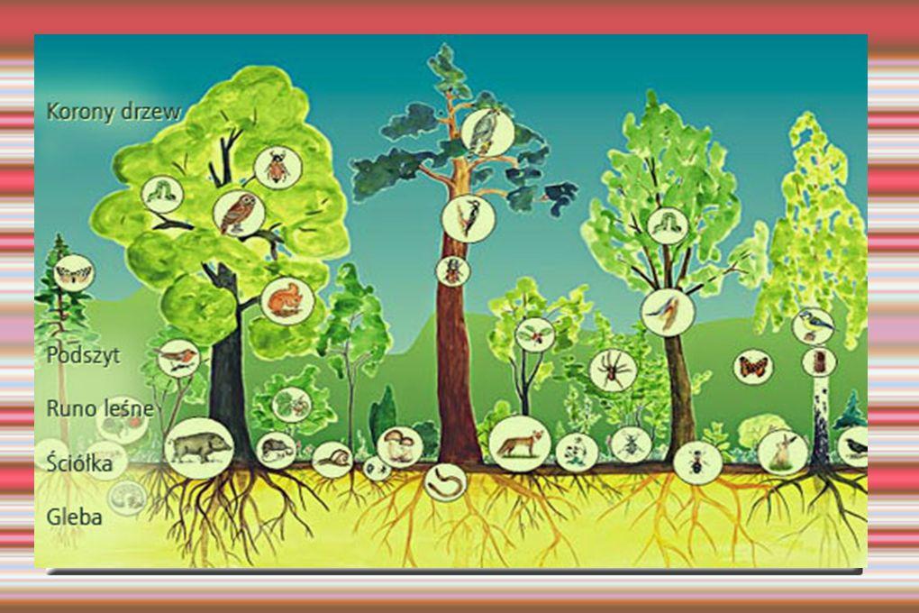 Niebezpieczeństwo dla lasu abiotyczne bodźce pożary lasów, wyładowania elektryczne, grad, wiatr, niska temperatura, wysoka temperatura, niekorzystne warunki świetlne, niekorzystne warunki wodne, kwaśne deszcze biotyczne czynniki pasożytnicze owady, pasożytnicze grzyby.