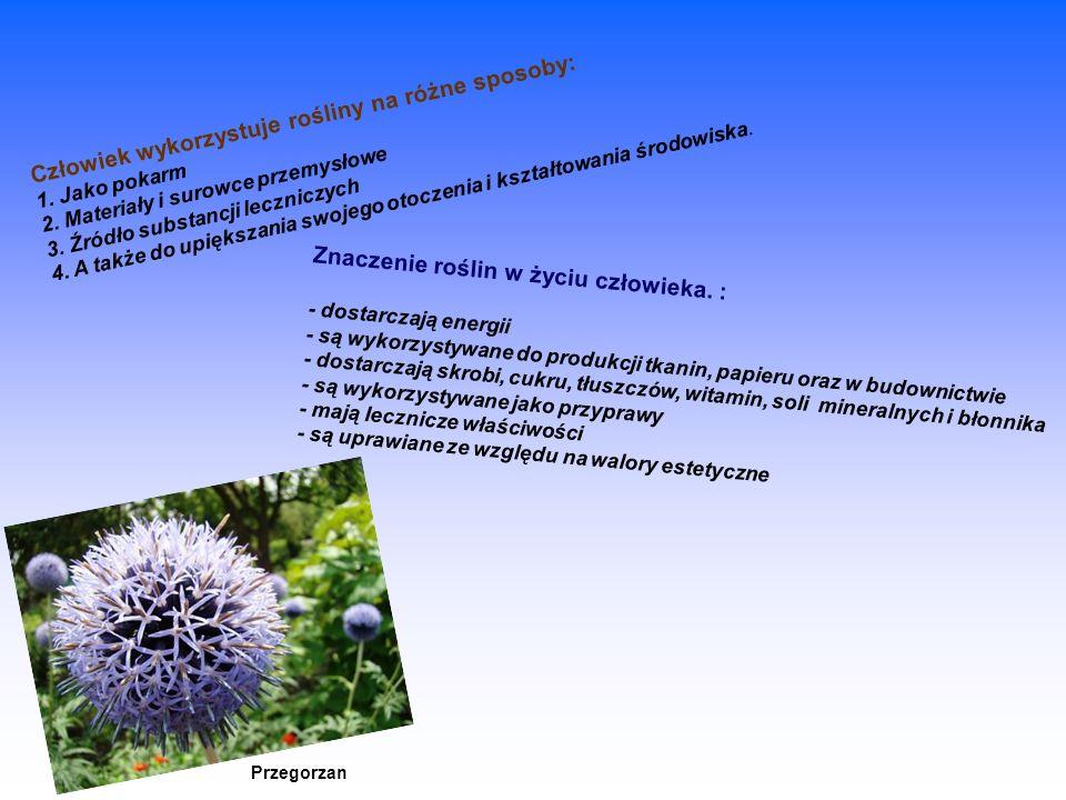 Znaczenie roślin w życiu człowieka. : - dostarczają energii - są wykorzystywane do produkcji tkanin, papieru oraz w budownictwie - dostarczają skrobi,
