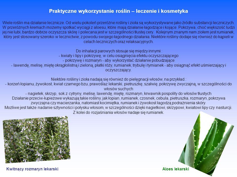Praktyczne wykorzystanie roślin – leczenie i kosmetyka Wiele roślin ma działanie lecznicze. Od wielu pokoleń przeróżne rośliny i zioła są wykorzystywa