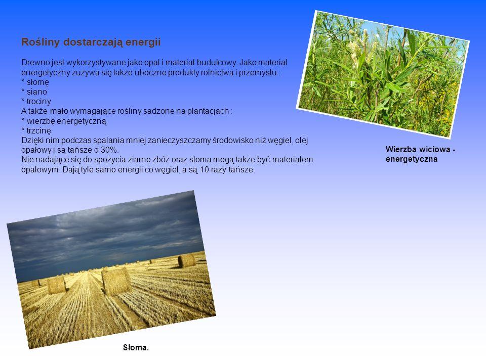 Rośliny dostarczają energii Drewno jest wykorzystywane jako opał i materiał budulcowy. Jako materiał energetyczny zużywa się także uboczne produkty ro