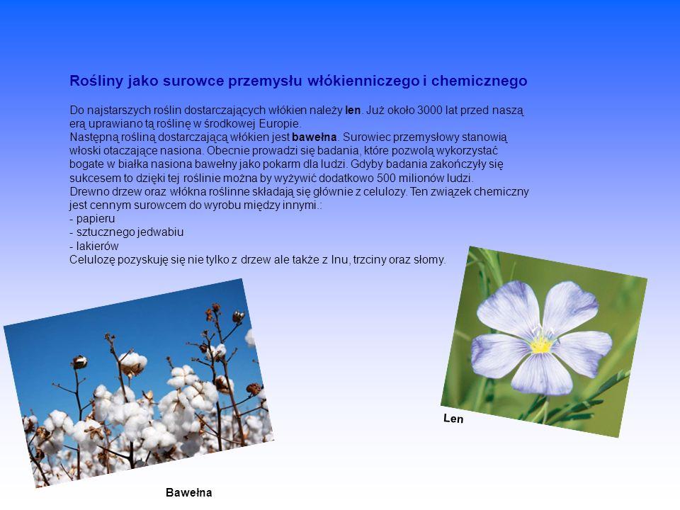 Rośliny jako surowce przemysłu włókienniczego i chemicznego Do najstarszych roślin dostarczających włókien należy len. Już około 3000 lat przed naszą