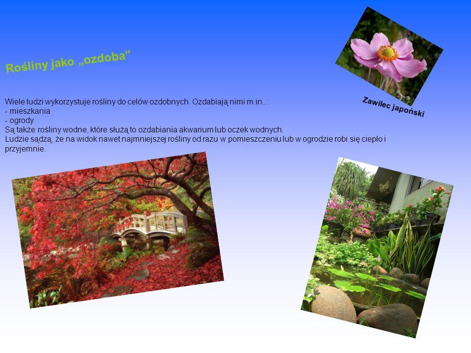 Rośliny jako ozdoba Wiele ludzi wykorzystuje rośliny do celów ozdobnych. Ozdabiają nimi m.in.. : - mieszkania - ogrody Są także rośliny wodne, które s