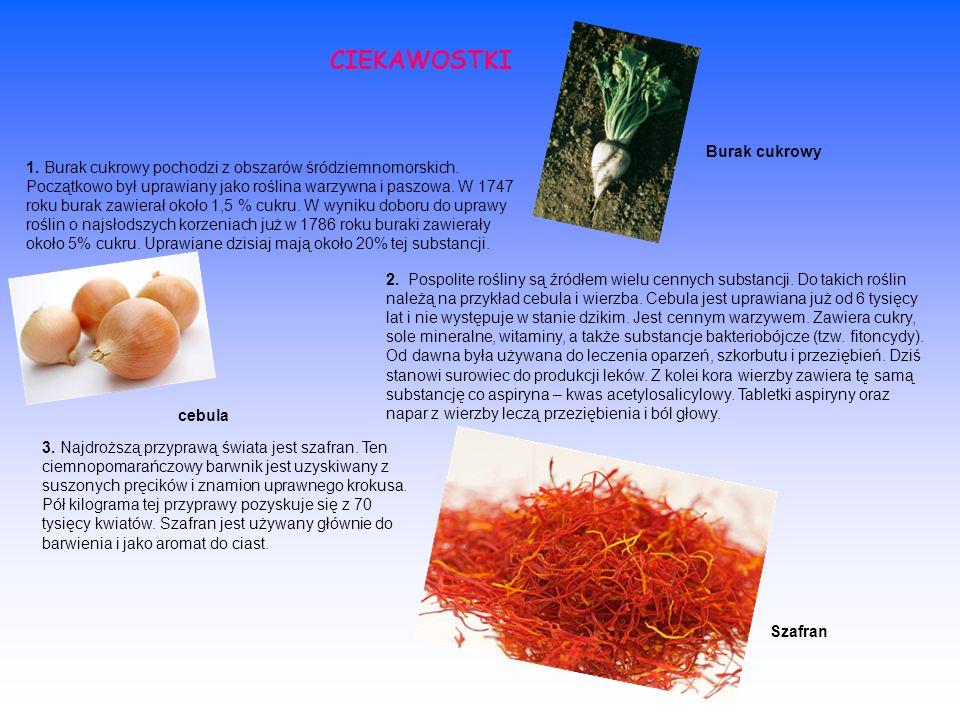 CIEKAWOSTKI 1. Burak cukrowy pochodzi z obszarów śródziemnomorskich. Początkowo był uprawiany jako roślina warzywna i paszowa. W 1747 roku burak zawie