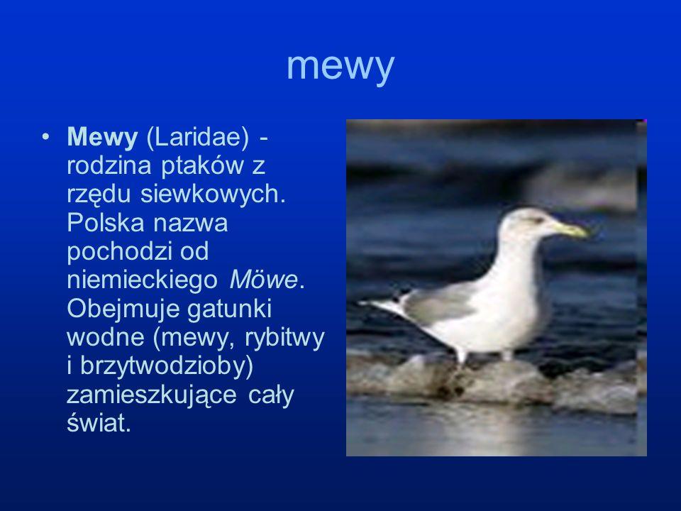 mewy Mewy (Laridae) - rodzina ptaków z rzędu siewkowych. Polska nazwa pochodzi od niemieckiego Möwe. Obejmuje gatunki wodne (mewy, rybitwy i brzytwodz