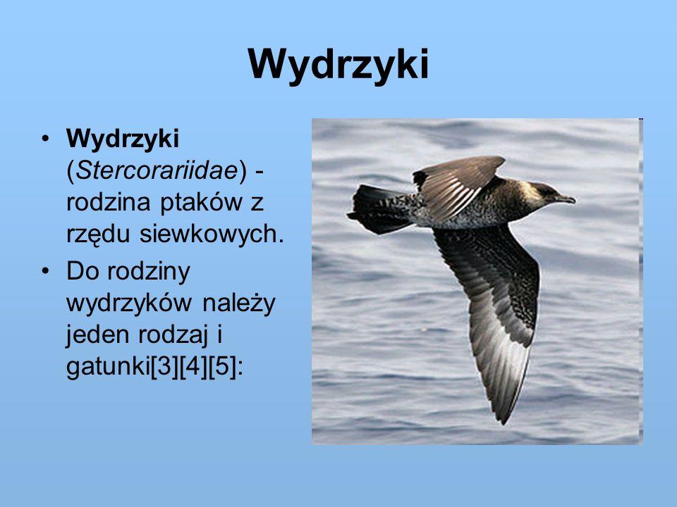 Wydrzyki Wydrzyki (Stercorariidae) - rodzina ptaków z rzędu siewkowych. Do rodziny wydrzyków należy jeden rodzaj i gatunki[3][4][5]: