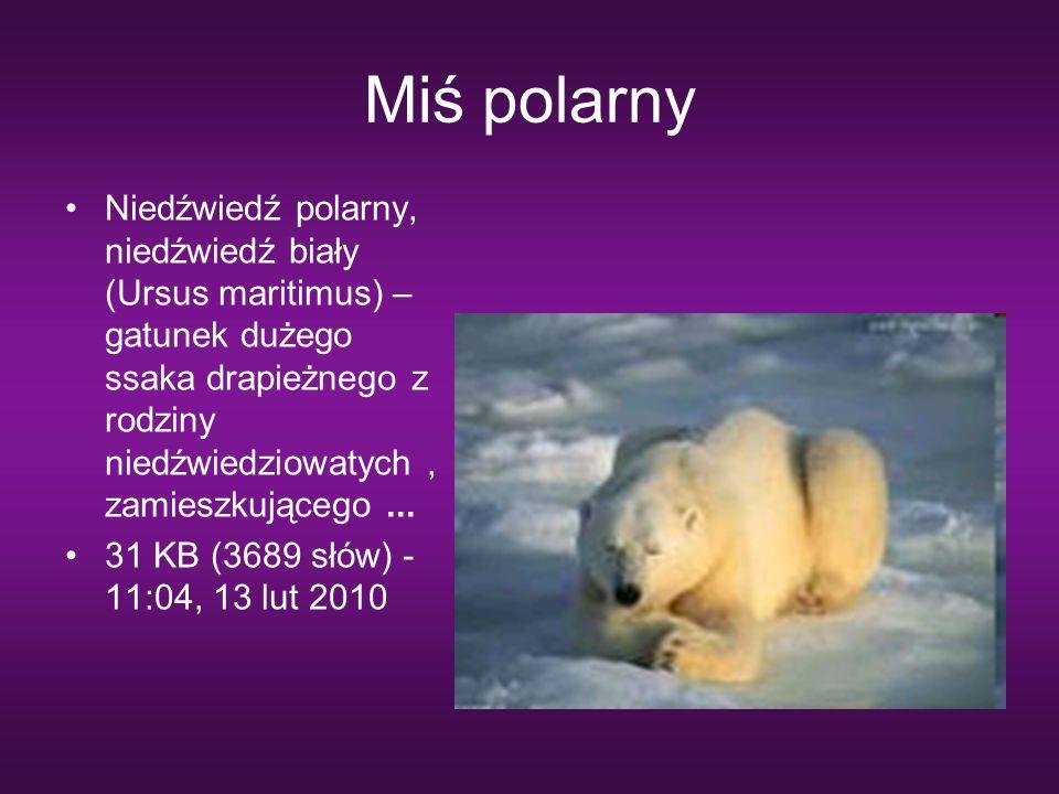 Miś polarny Niedźwiedź polarny, niedźwiedź biały (Ursus maritimus) – gatunek dużego ssaka drapieżnego z rodziny niedźwiedziowatych, zamieszkującego...