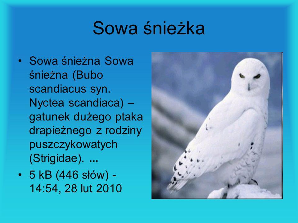 Sowa śnieżka Sowa śnieżna Sowa śnieżna (Bubo scandiacus syn. Nyctea scandiaca) – gatunek dużego ptaka drapieżnego z rodziny puszczykowatych (Strigidae