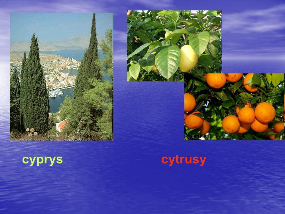 cypryscytrusy