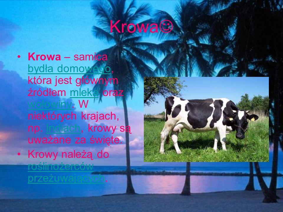 Krowa Krowa – samica bydła domowego, która jest głównym źródłem mleka oraz wołowiny. W niektórych krajach, np. Indiach, krowy są uważane za święte. by
