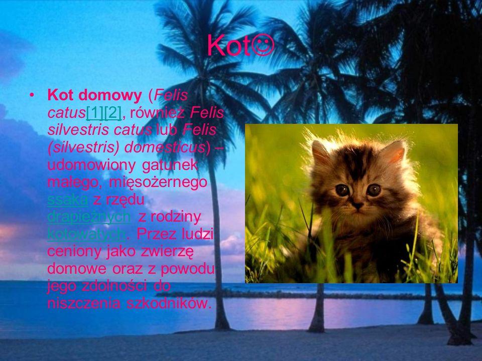 Kot Kot domowy (Felis catus[1][2], również Felis silvestris catus lub Felis (silvestris) domesticus) – udomowiony gatunek małego, mięsożernego ssaka z