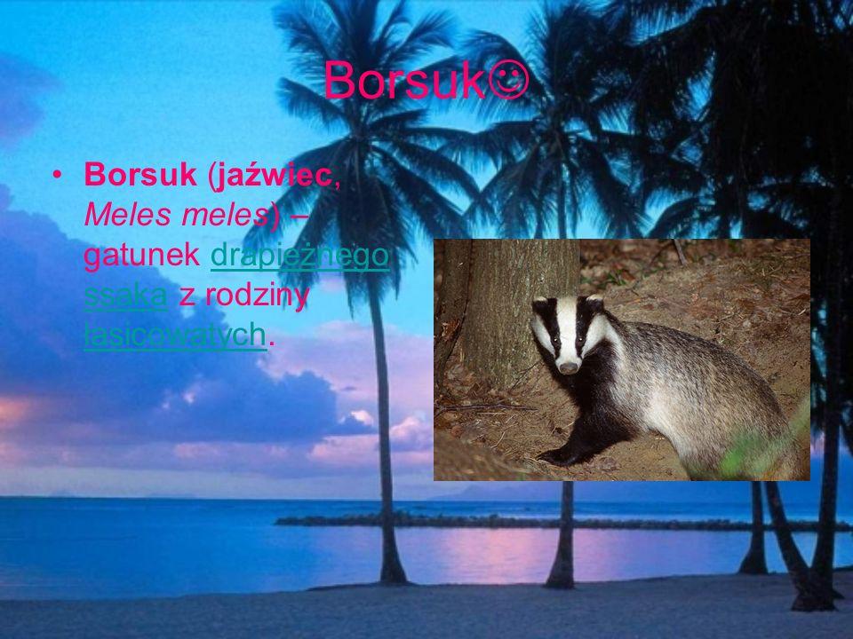 Borsuk Borsuk (jaźwiec, Meles meles) – gatunek drapieżnego ssaka z rodziny łasicowatych.drapieżnego ssaka łasicowatych