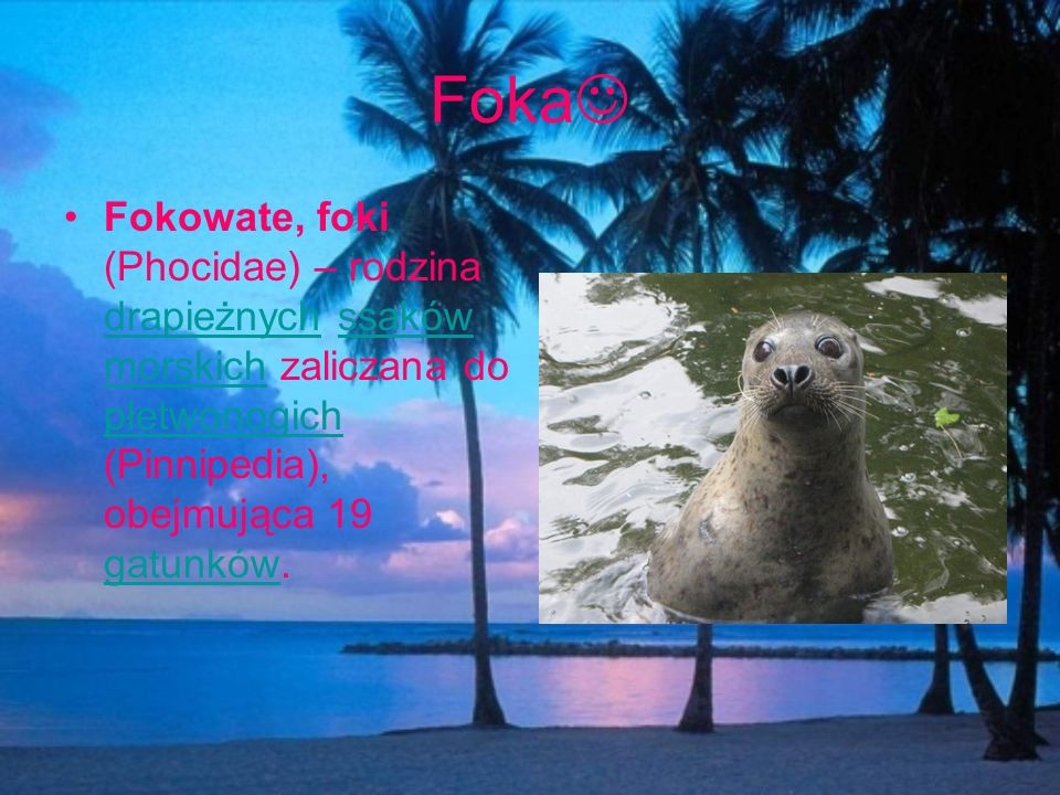 Foka Fokowate, foki (Phocidae) – rodzina drapieżnych ssaków morskich zaliczana do płetwonogich (Pinnipedia), obejmująca 19 gatunków. drapieżnychssaków