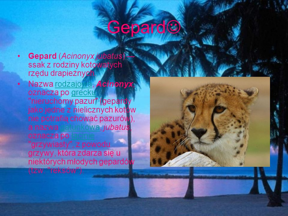 Gepard Gepard (Acinonyx jubatus) ssak z rodziny kotowatych rzędu drapieżnych. Nazwa rodzajowa, Acinonyx, oznacza po grecku