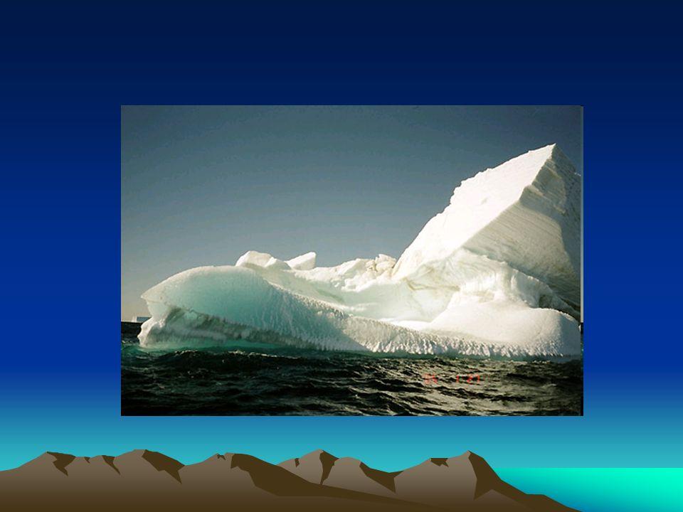 Wilk polarny Wilk polarny– jeden z największych podgatunków wilka.