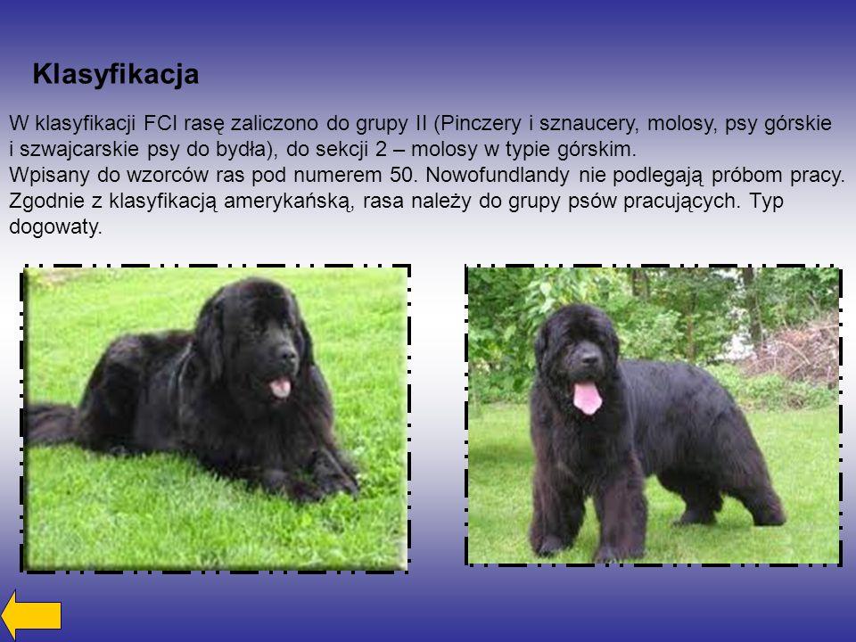 Klasyfikacja W klasyfikacji FCI rasę zaliczono do grupy II (Pinczery i sznaucery, molosy, psy górskie i szwajcarskie psy do bydła), do sekcji 2 – molo