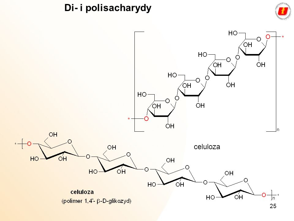 25 celuloza Di- i polisacharydy
