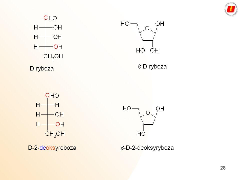 28 D-ryboza D-2-deoksyroboza -D-ryboza -D-2-deoksyryboza