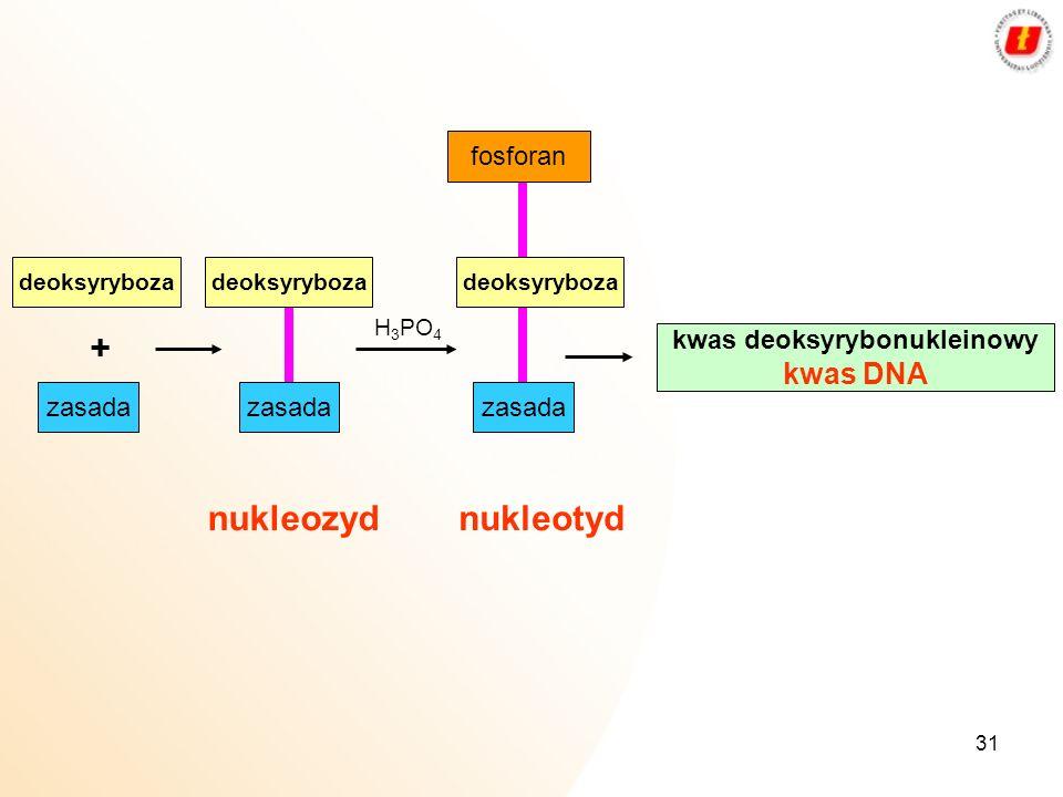 31 deoksyryboza + H 3 PO 4 fosforan kwas deoksyrybonukleinowy kwas DNA zasada nukleozydnukleotyd deoksyryboza