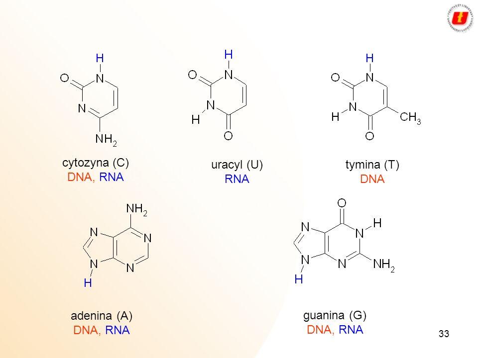 33 cytozyna (C) DNA, RNA uracyl (U) RNA tymina (T) DNA adenina (A) DNA, RNA guanina (G) DNA, RNA