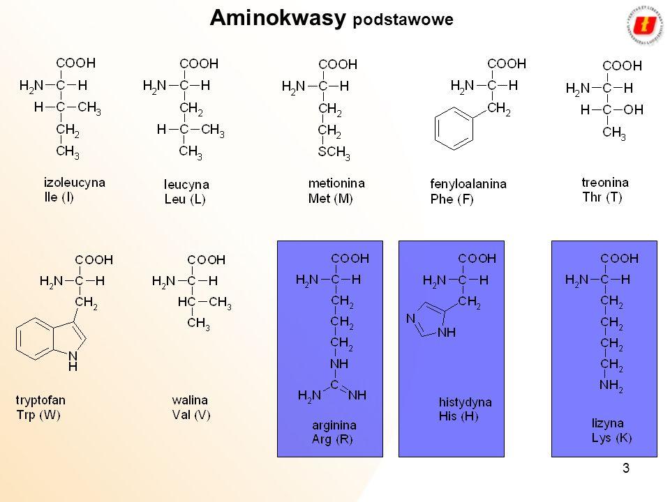3 Aminokwasy podstawowe
