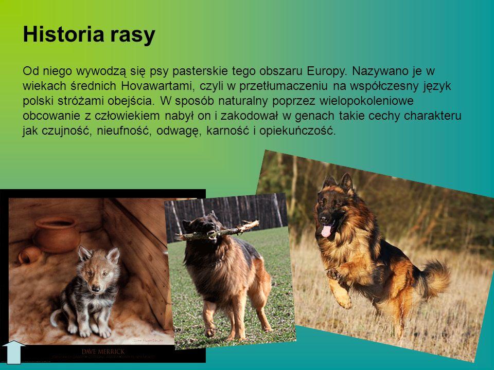 Od niego wywodzą się psy pasterskie tego obszaru Europy. Nazywano je w wiekach średnich Hovawartami, czyli w przetłumaczeniu na współczesny język pols