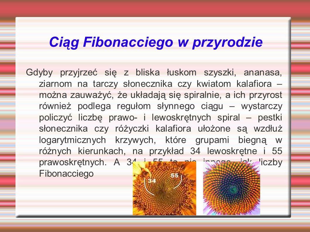 Ciąg Fibonacciego w przyrodzie Gdyby przyjrzeć się z bliska łuskom szyszki, ananasa, ziarnom na tarczy słonecznika czy kwiatom kalafiora – można zauważyć, że układają się spiralnie, a ich przyrost również podlega regułom słynnego ciągu – wystarczy policzyć liczbę prawo- i lewoskrętnych spiral – pestki słonecznika czy różyczki kalafiora ułożone są wzdłuż logarytmicznych krzywych, które grupami biegną w różnych kierunkach, na przykład 34 lewoskrętne i 55 prawoskrętnych.
