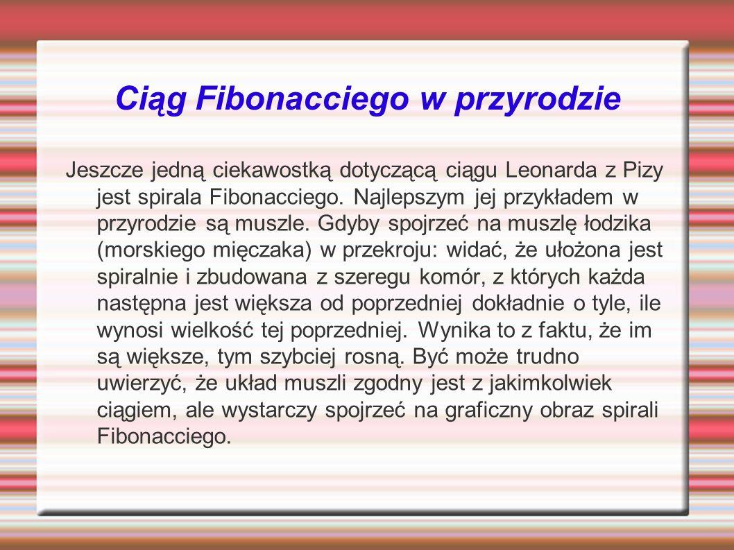 Ciąg Fibonacciego w przyrodzie Jeszcze jedną ciekawostką dotyczącą ciągu Leonarda z Pizy jest spirala Fibonacciego. Najlepszym jej przykładem w przyro