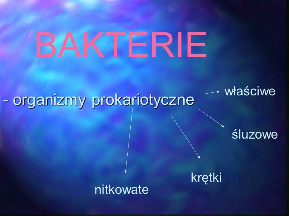 - organizmy prokariotyczne BAKTERIE właściwe śluzowe krętki nitkowate