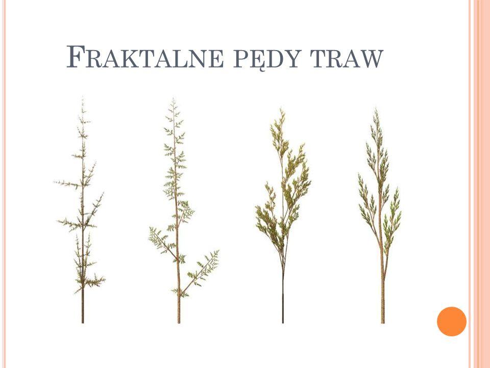 F RAKTALNE PĘDY TRAW