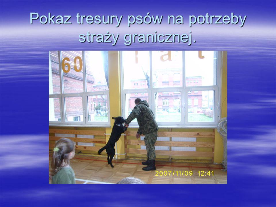 Oto niektóre przykłady działalności Szkolnego Koła LOP przy SP 3 w Żarach: Wystawa psów. Wystawa psów.