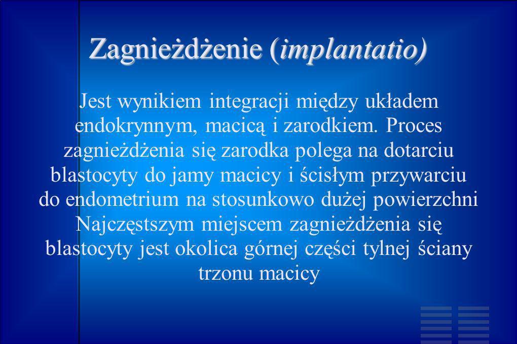 Zagnieżdżenie (implantatio) Jest wynikiem integracji między układem endokrynnym, macicą i zarodkiem. Proces zagnieżdżenia się zarodka polega na dotarc