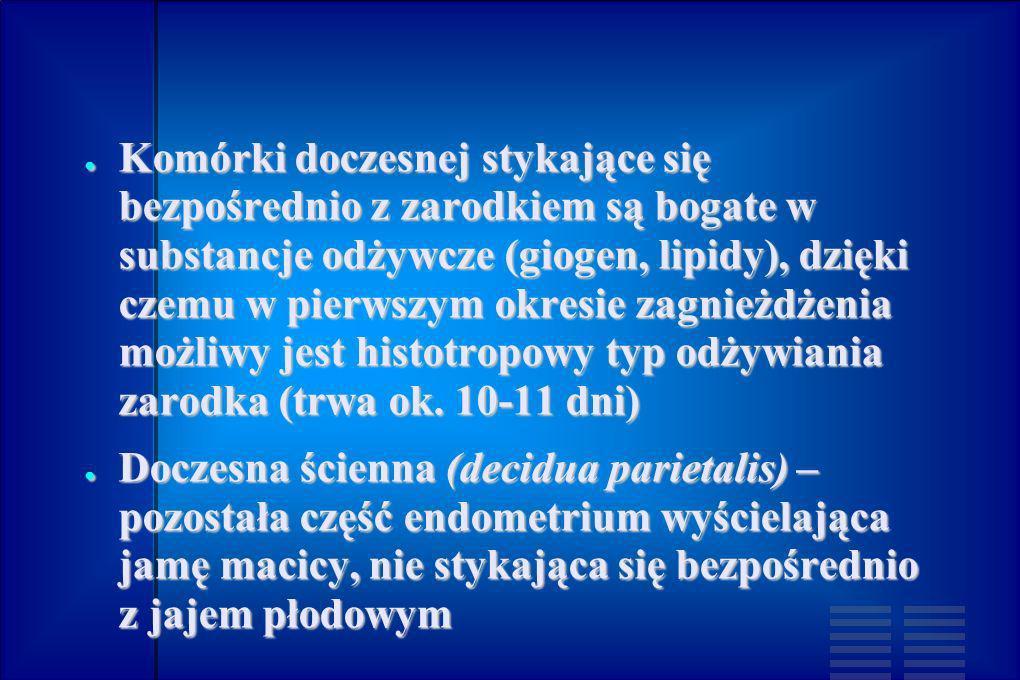 Komórki doczesnej stykające się bezpośrednio z zarodkiem są bogate w substancje odżywcze (giogen, lipidy), dzięki czemu w pierwszym okresie zagnieżdże