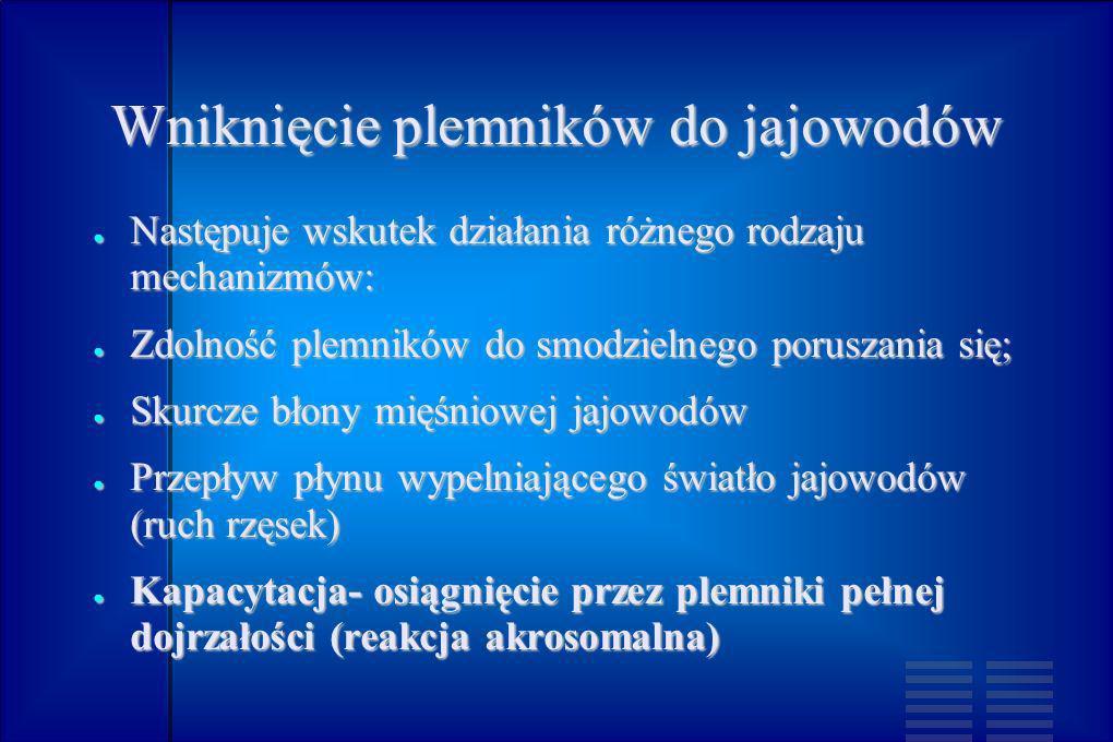 Błony płodowe – powstaja z kosmówki (chorion) oraz owodni (amnion).