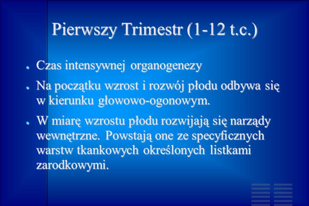 Pierwszy Trimestr (1-12 t.c.) Czas intensywnej organogenezy Czas intensywnej organogenezy Na początku wzrost i rozwój płodu odbywa się w kierunku głow