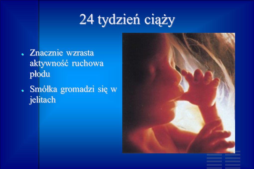 24 tydzień ciąży Znacznie wzrasta aktywność ruchowa płodu Znacznie wzrasta aktywność ruchowa płodu Smółka gromadzi się w jelitach Smółka gromadzi się