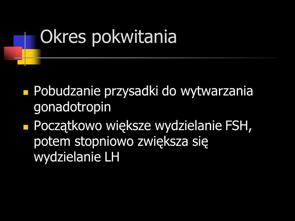 Okres pokwitania Pobudzanie przysadki do wytwarzania gonadotropin Początkowo większe wydzielanie FSH, potem stopniowo zwiększa się wydzielanie LH