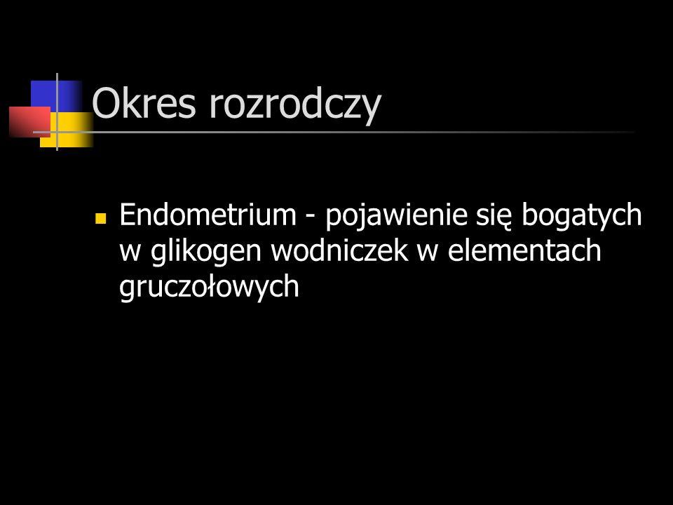 Okres rozrodczy Endometrium - pojawienie się bogatych w glikogen wodniczek w elementach gruczołowych
