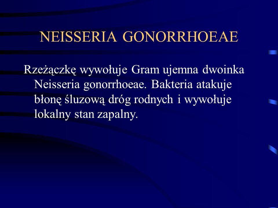 NEISSERIA GONORRHOEAE Rzeżączkę wywołuje Gram ujemna dwoinka Neisseria gonorrhoeae. Bakteria atakuje błonę śluzową dróg rodnych i wywołuje lokalny sta