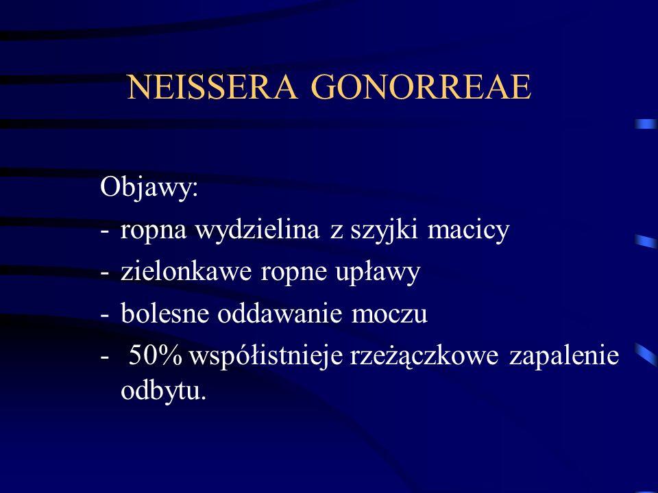 NEISSERA GONORREAE Objawy: -ropna wydzielina z szyjki macicy -zielonkawe ropne upławy -bolesne oddawanie moczu - 50% współistnieje rzeżączkowe zapalenie odbytu.